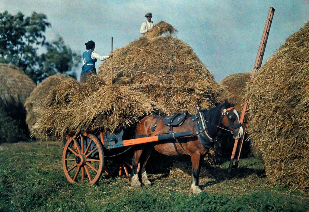 Фермеры складывают сено на повозку, графство Корк.