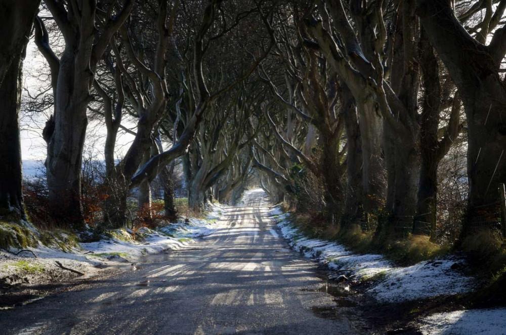 Буковый тоннель в Северной Ирландии.