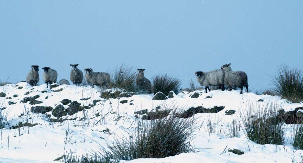 Животные на острове Ирландия.