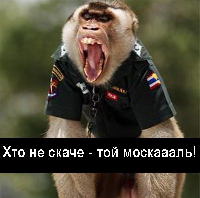 1 обезьяна