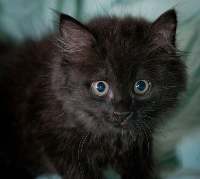 тяжелым пластиковым фото черного пушистого котенка процесс пересадки рассады