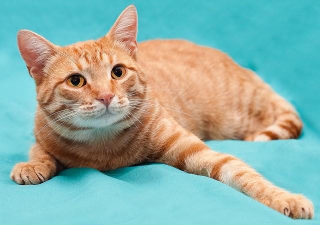 Забавные фотографии рыжиков, Рыжий кот