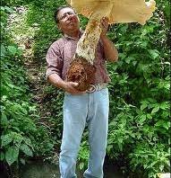 фото грибы великаны