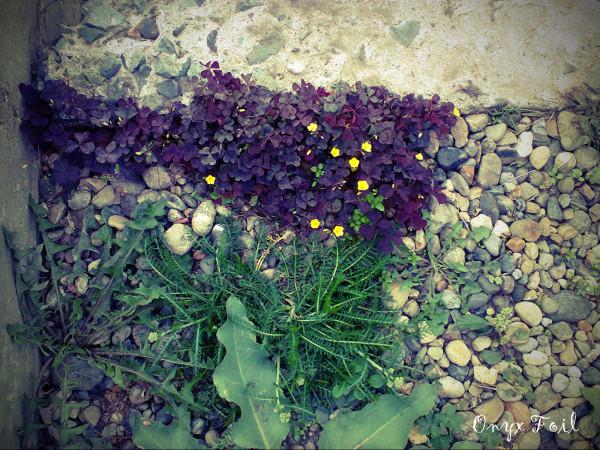 цветочки web