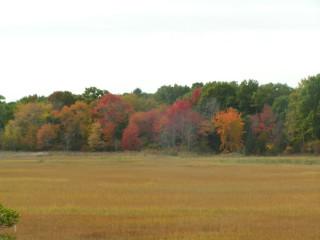 marsh mixed foliage