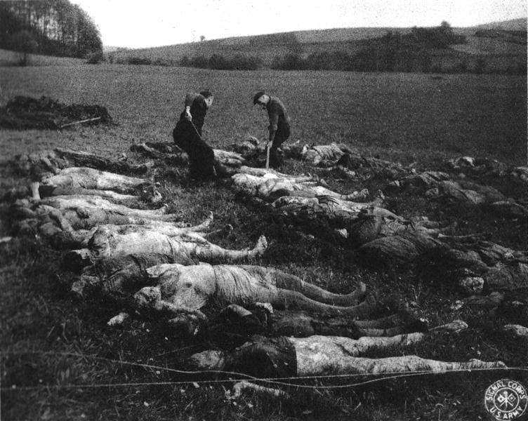 752px-Mass_grave_Germany_1945,_Hirzenhain_3