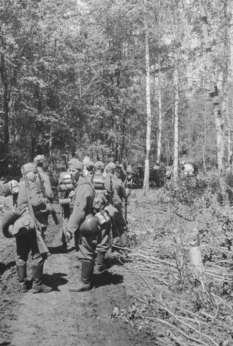 kolona-v-lesu
