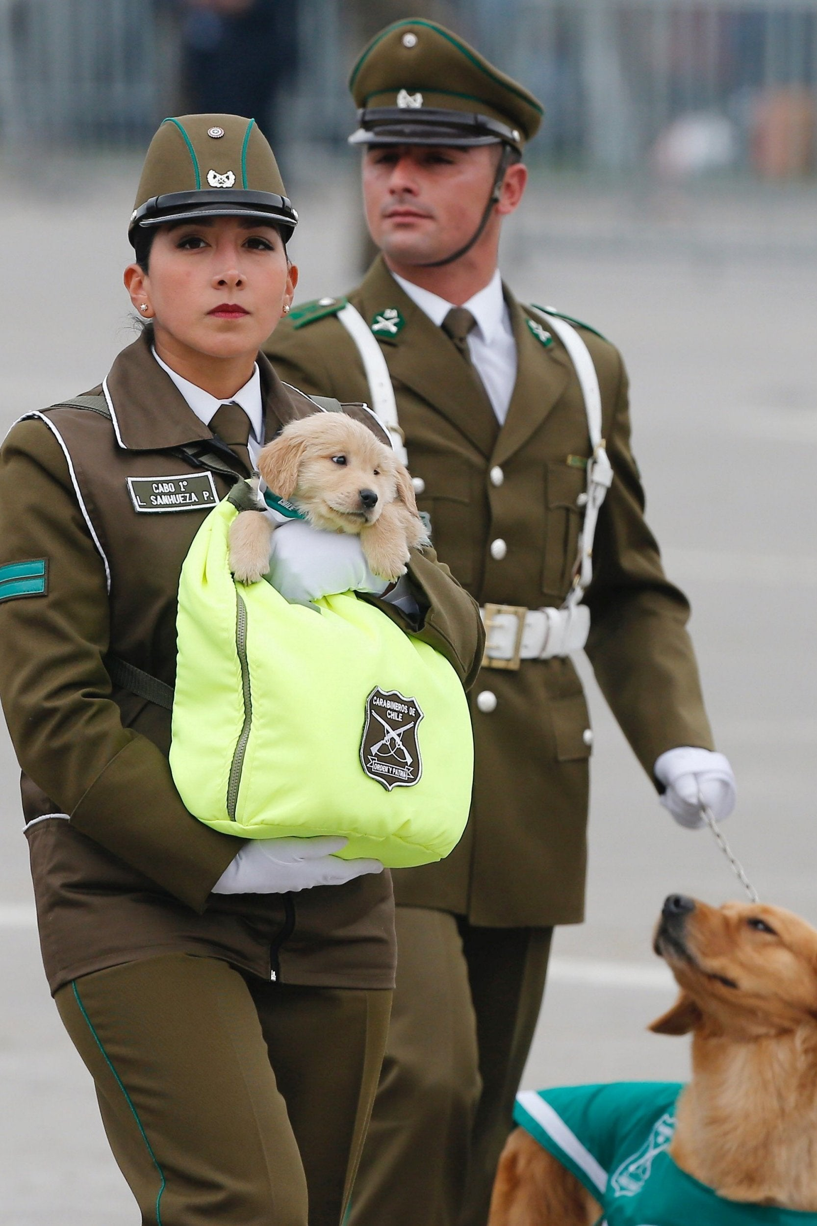PuppiesChile.jpg