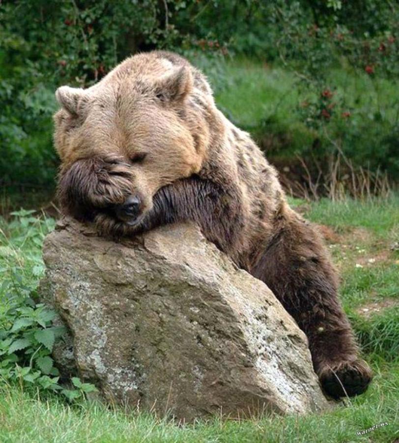 Картинки прикол с медведем, открытки день рождения