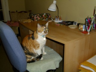 Kala at clean desk