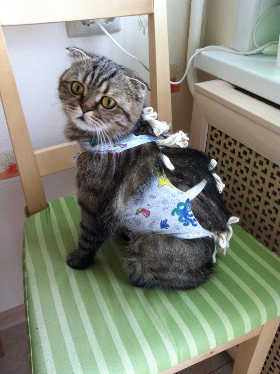Как кошке сделать попонку