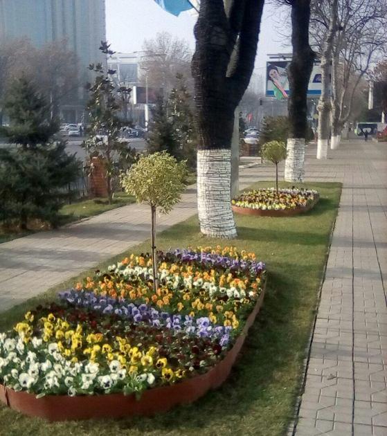 Цветы в Ташкенте
