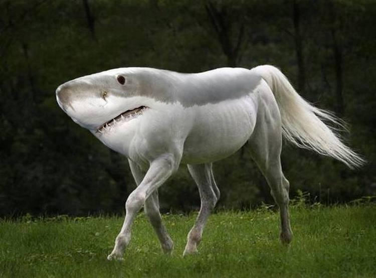 Зубастый конь