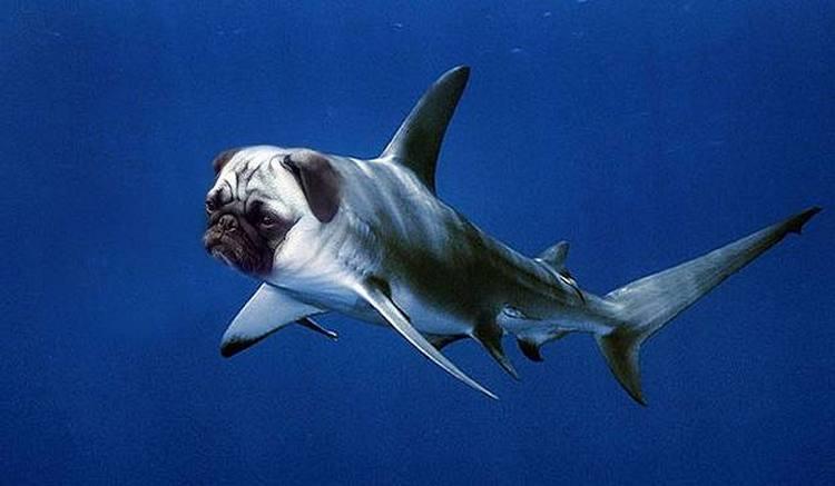 Океанский акуломопс