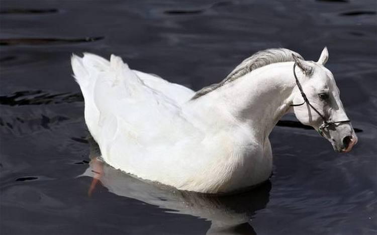 Плавающий гусеконь
