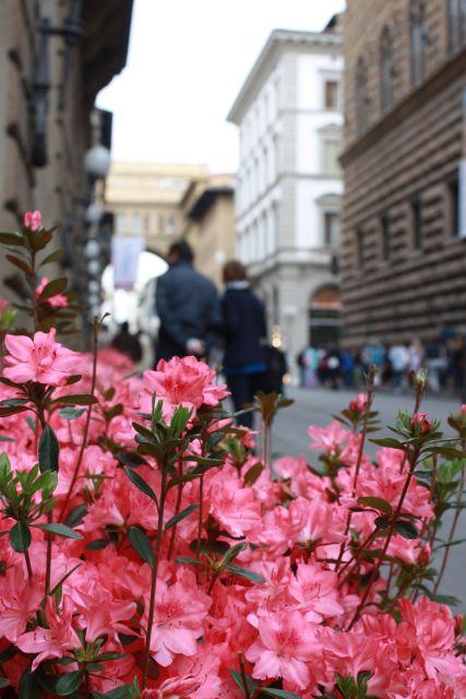 Флоренция (1)