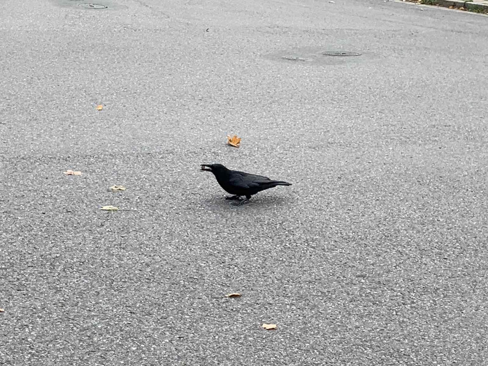 Ворон или черная ворона? Птиц на определение.
