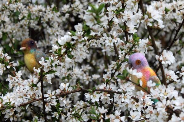 Две птички 1_мал.jpg