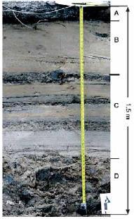 Типичный срез осадочных слоев
