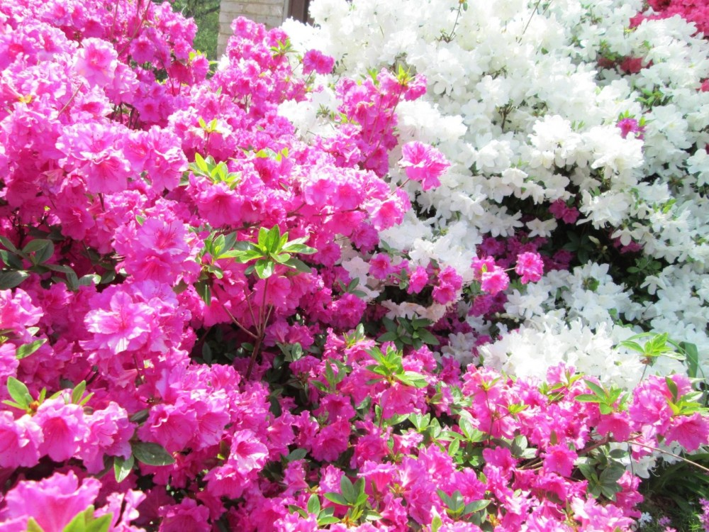 imageCAG2Y50D.jpg