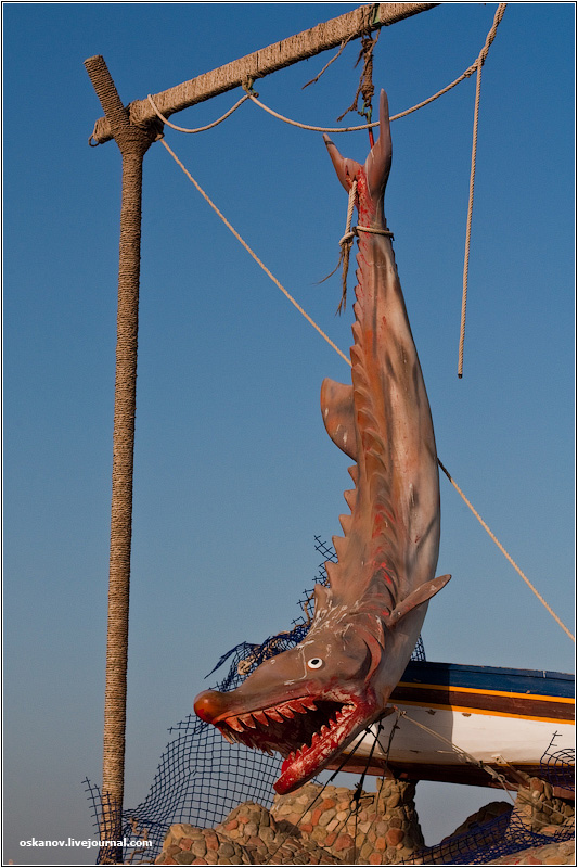 акула прогрызла лодку
