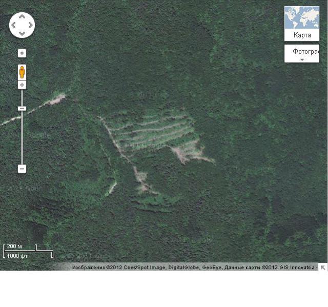вяземский вывал леса