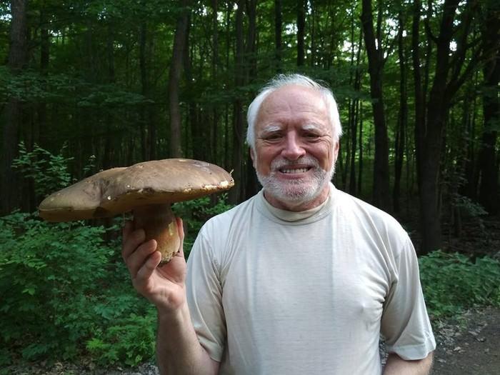 Гарольд нашел гриб