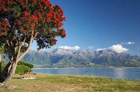 новозеландское лето