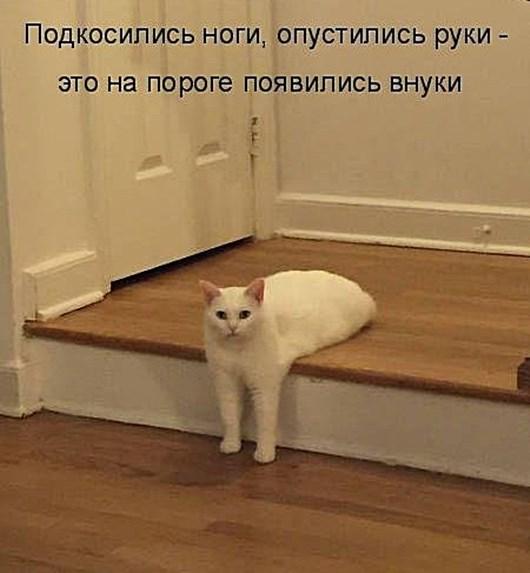 1451303187446