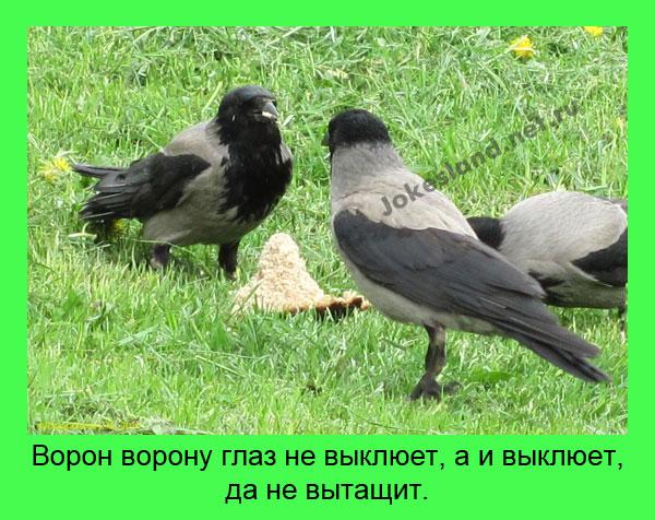 1450432013_5
