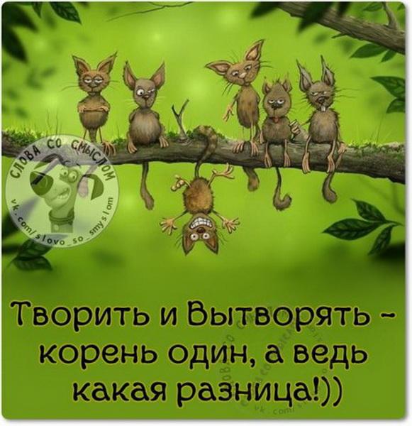 1447569706_1447431888_qiziqma0upa_novyy-razmer