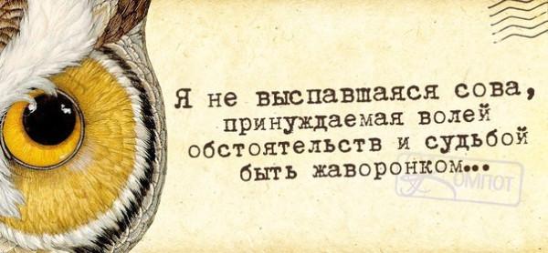 1390850103_frazochki-18