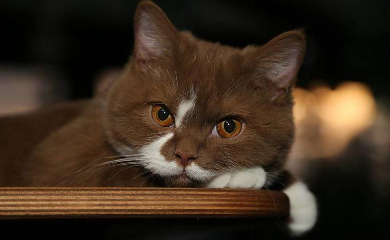 Как кошка показывает наличие негатива в доме