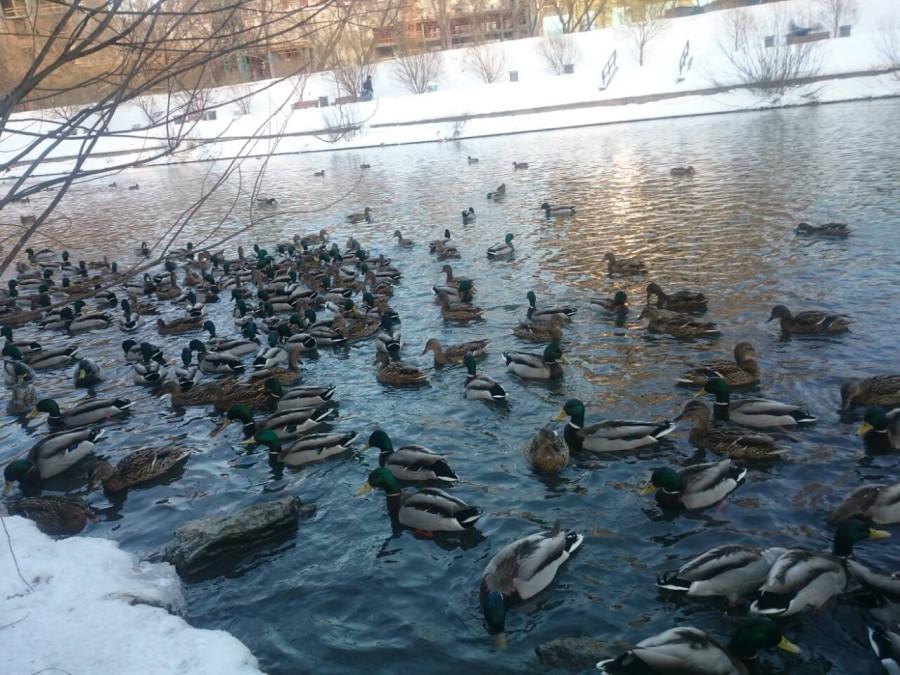 Навестили уточек на городском пруду