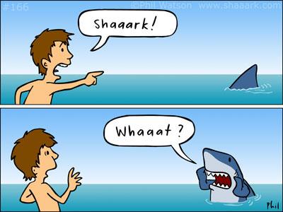 shark whaat