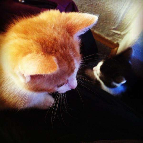 IMG_4947 kittens insta