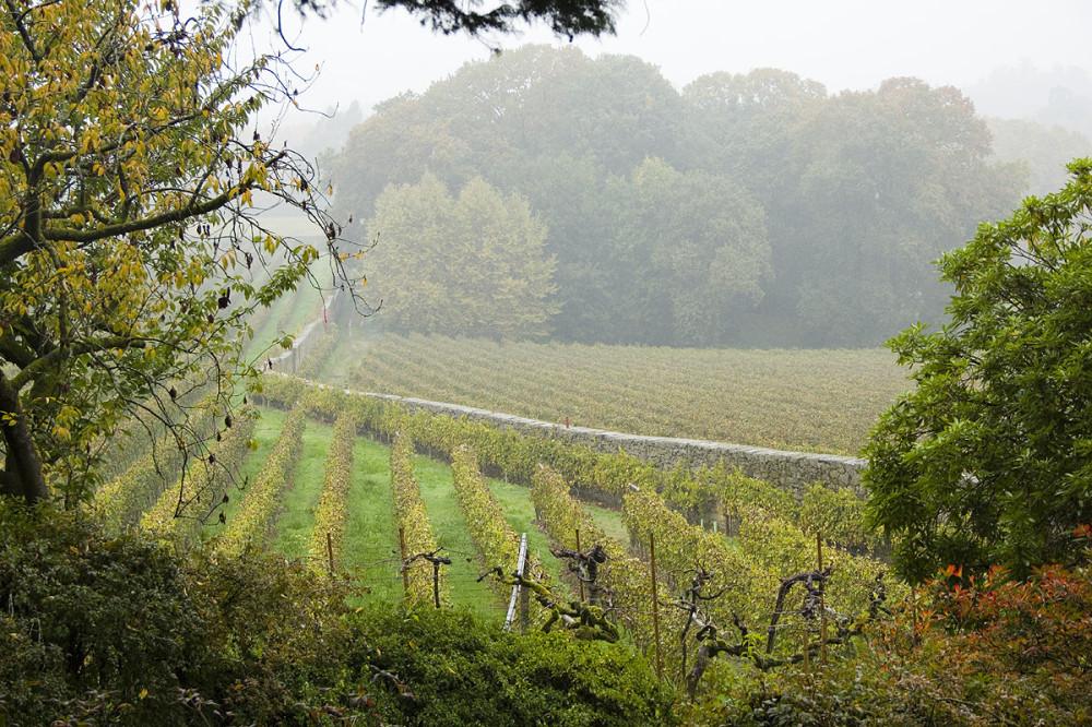 Бесконечные ряды виноградников одного из самых зеленых винодельческих регионов мира