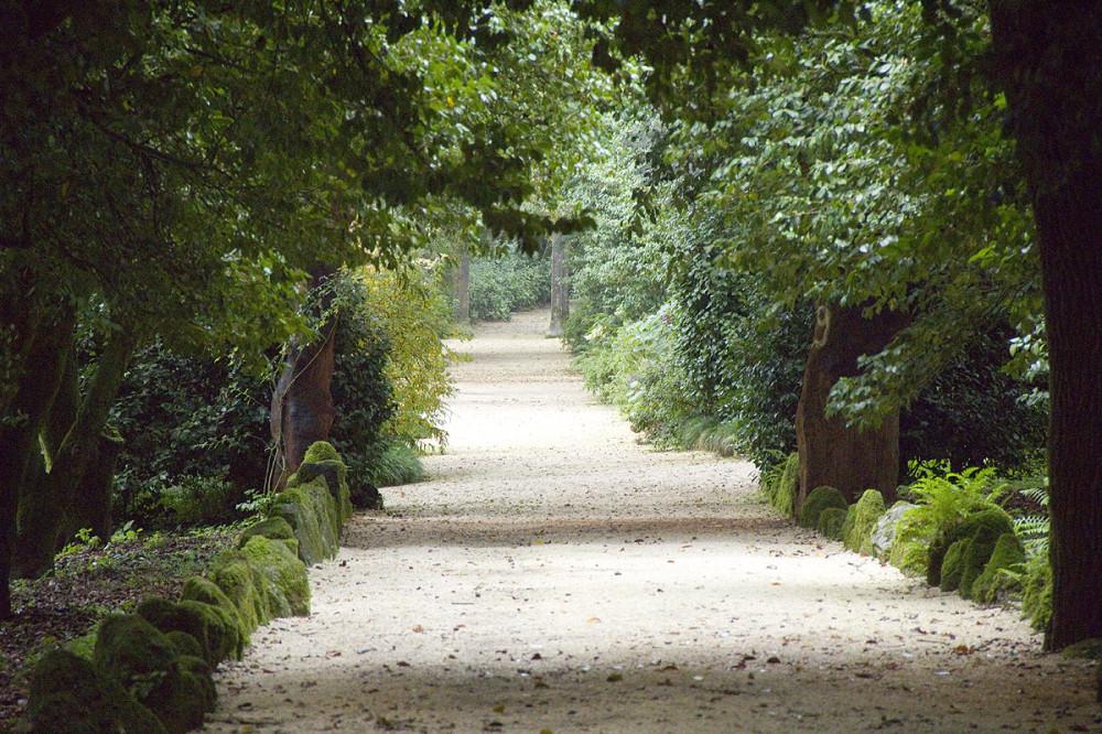 Парк с пробковыми дубами в поместье Aveleda