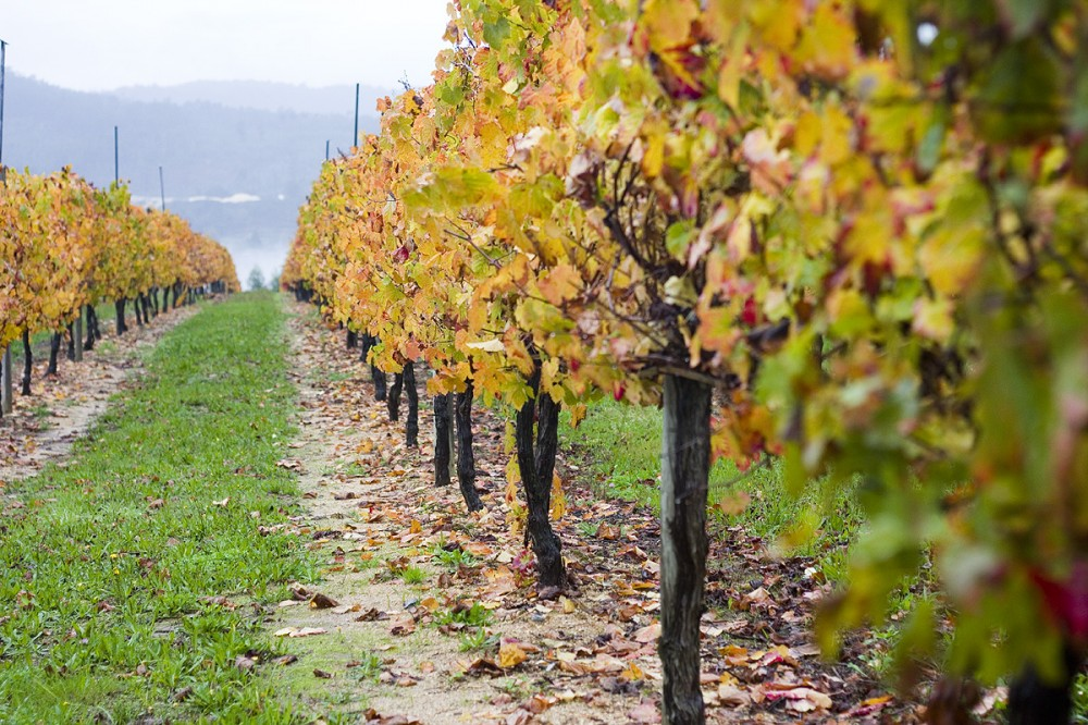 Уходящие за горизонт виноградники Quinta da Lixa (Кинта да Лиша)