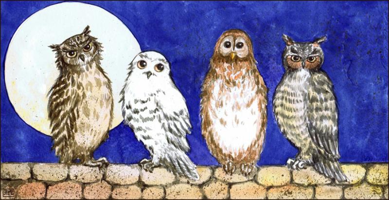 owlsbanner