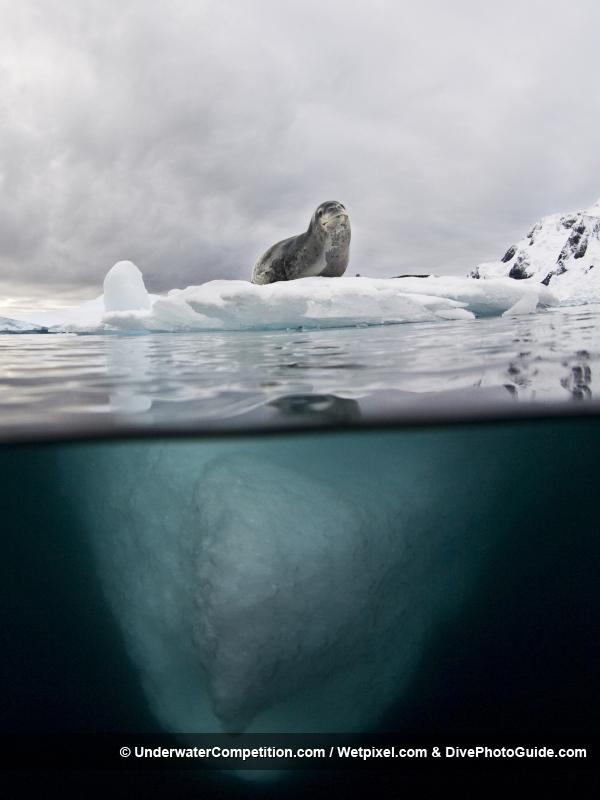 """Фото - победители конкурса """"Our World Underwater 2010"""""""