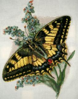 Бабочка - лицевая сторона
