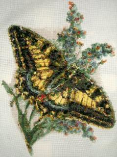 Бабочка - изнаночная сторона