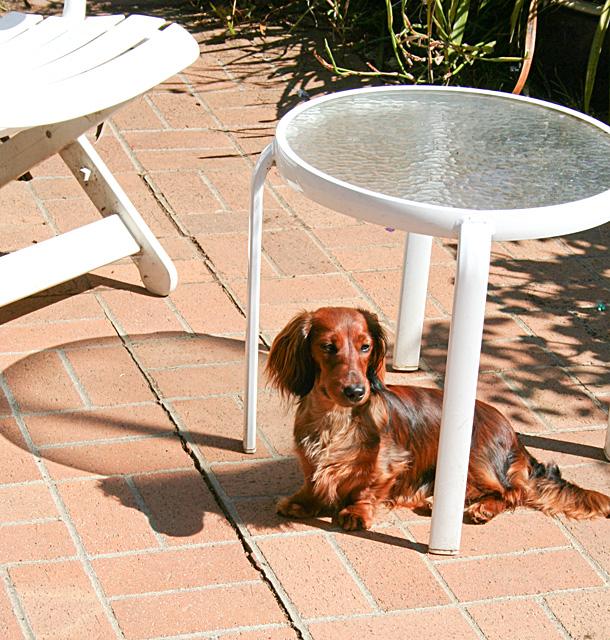 Day 179 - Sun Dog