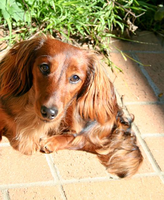 Day 221 - Sun Dog