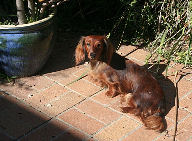 Day 245 - Fall Sun Dog
