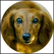 Syntax Workman Kulik Dog