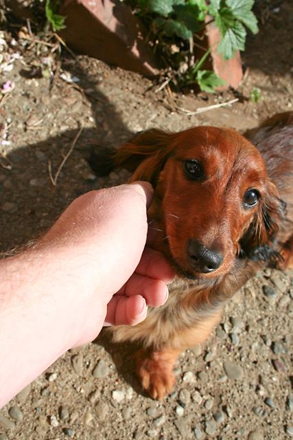 Day 68 - Petting the Running Dog