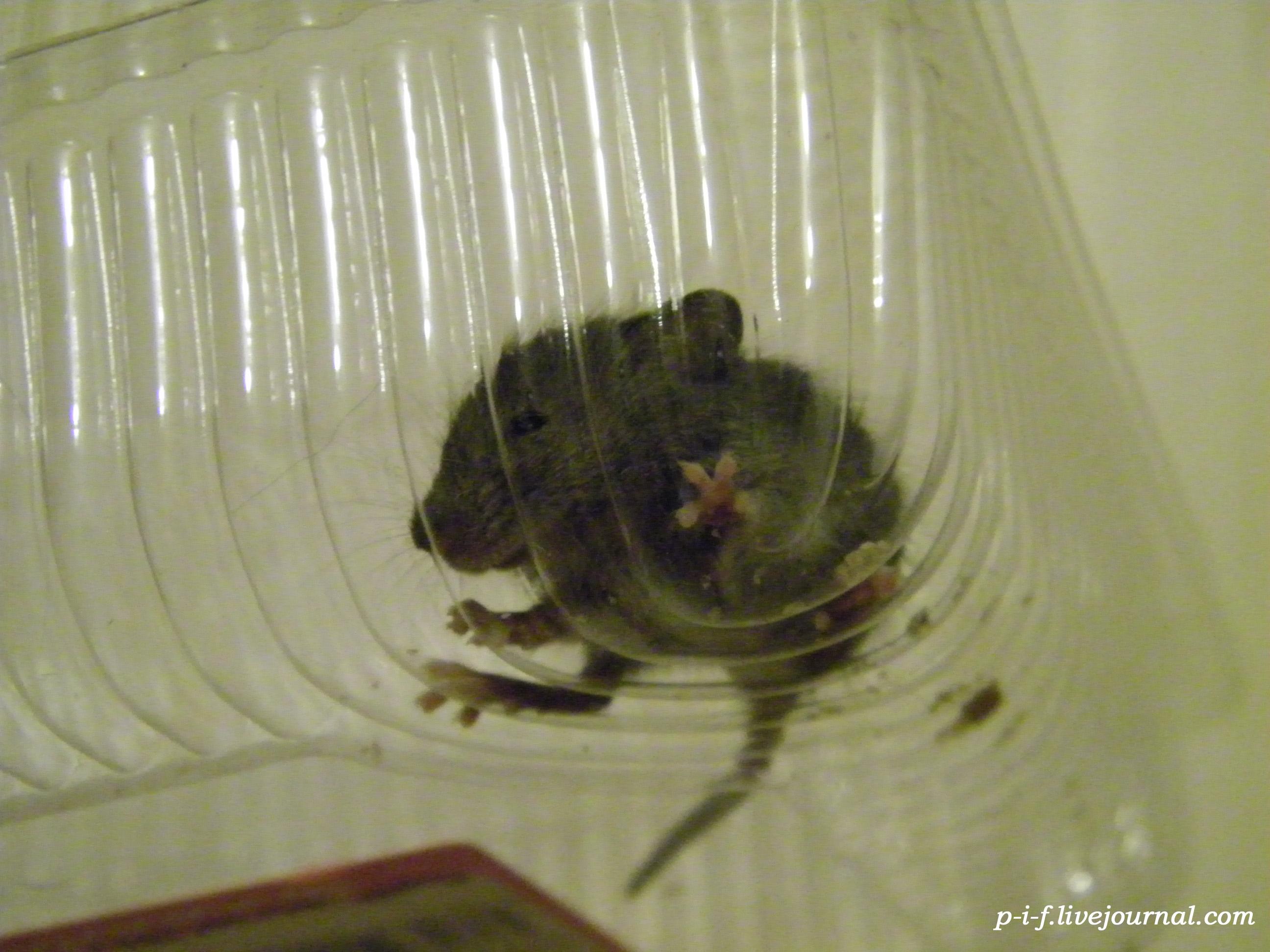 Поймал мыша - ешь неспеша.