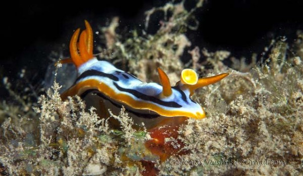 Грязный дайвинг в Малайзии (Muck diving in Malaysia)